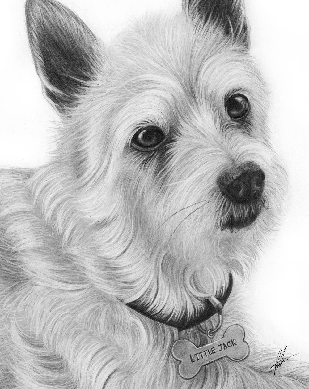 laura-eddy-drawing-little-jack-russell-closeup-01.jpg
