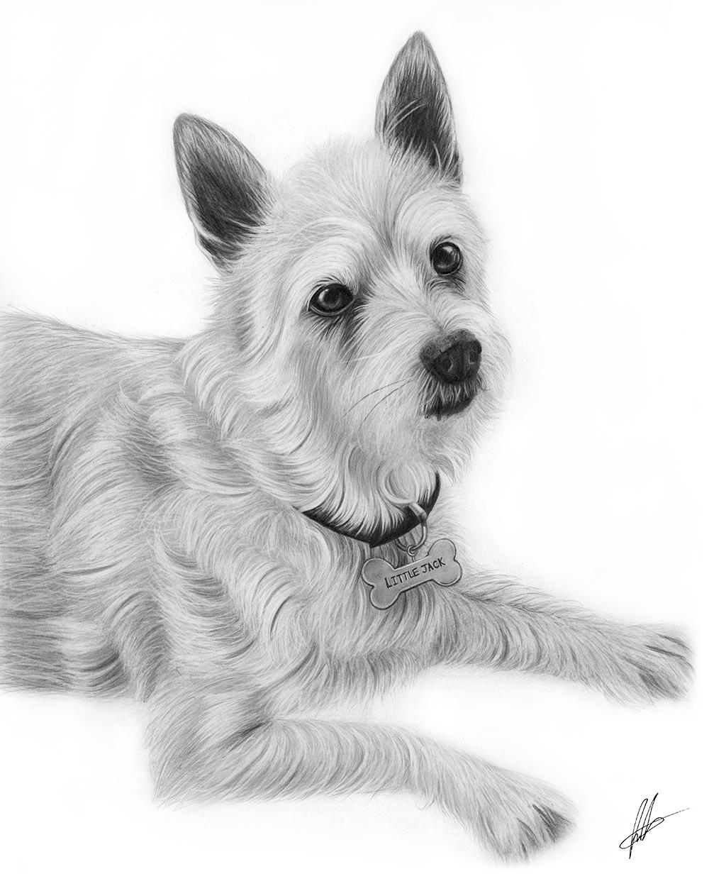 laura-eddy-drawing-little-jack-russell.jpg