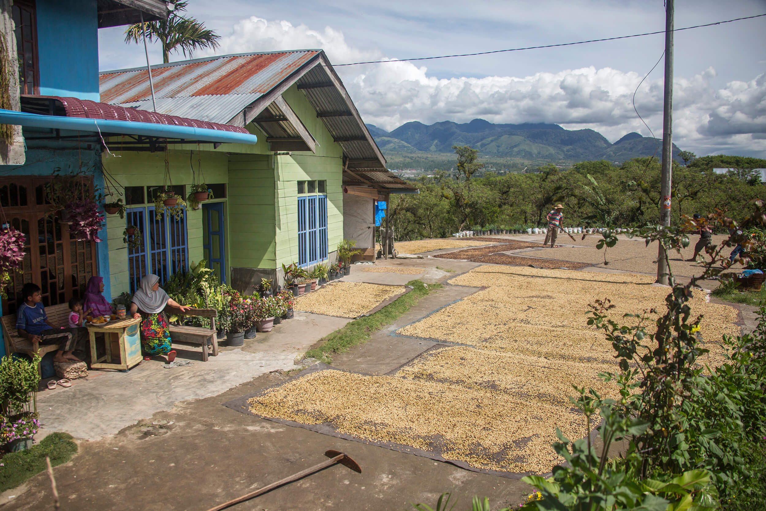 Indonesian family dries their coffee on the ground.