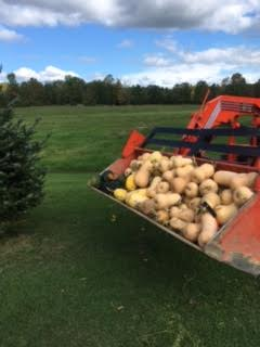"""This was a picture my Dad sent me from some of the Fall harvest at home, with the title of the email : """"It's Time"""""""