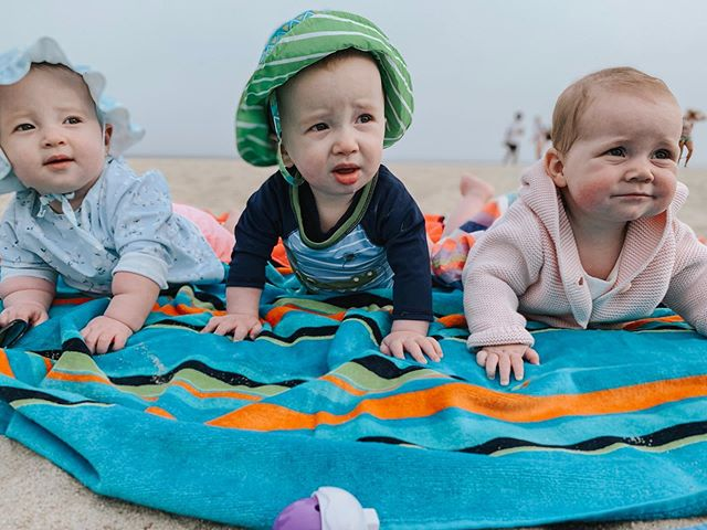 Three Katzs on a Beach. . . . Scroll to see Cedar's excitement. #beachbabes