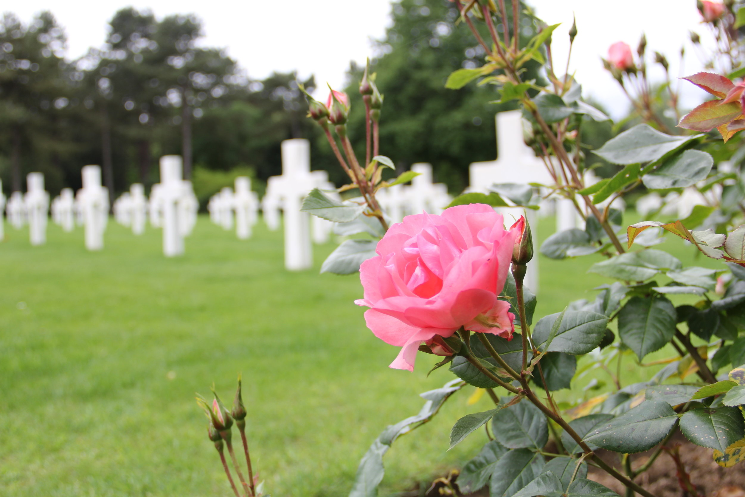 The American Cemetery at Normandy, a few days after Memorial Day.