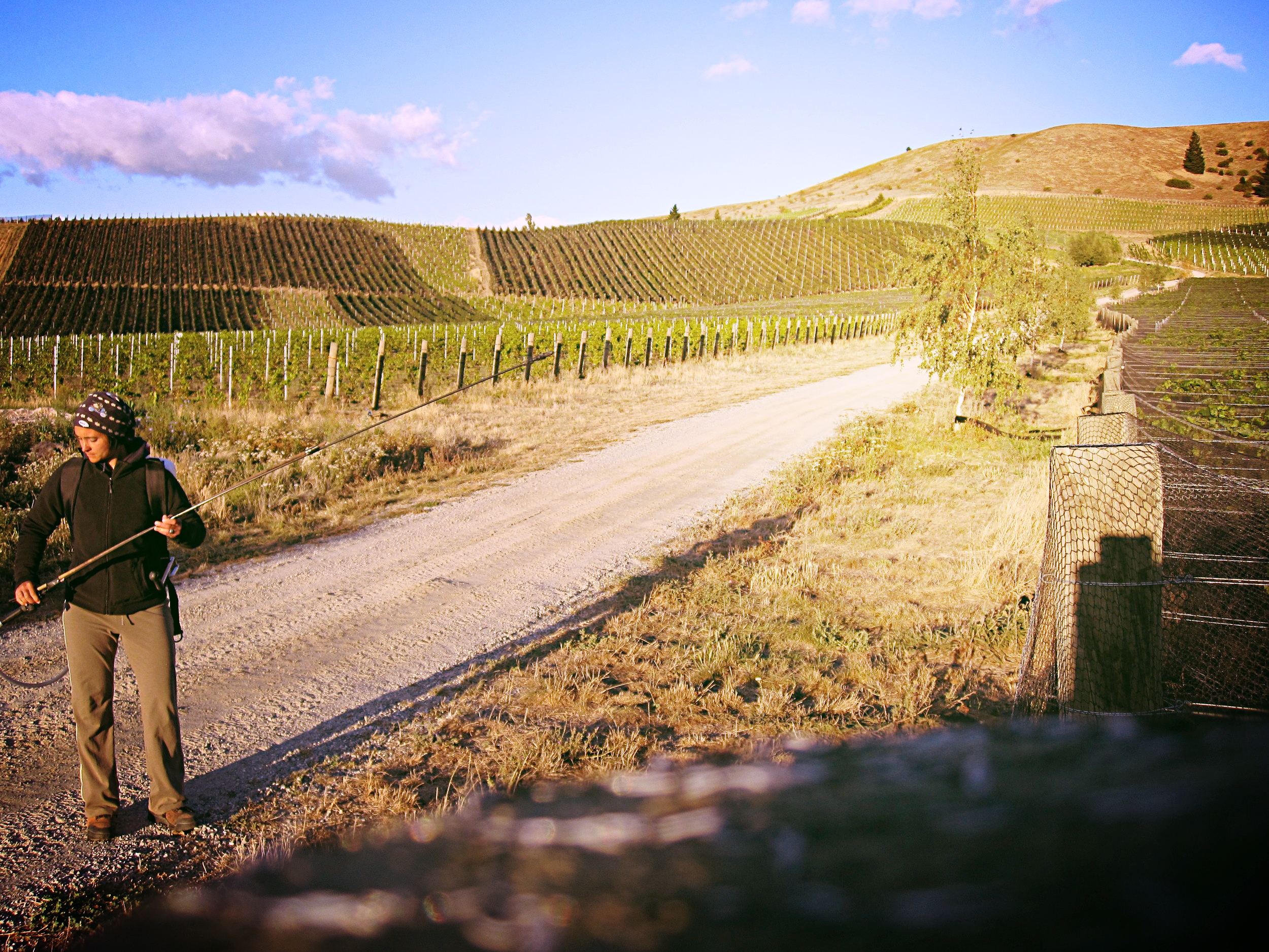 Biodynamic vineyard work | Central Otago, New Zealand (Mar. 2010)
