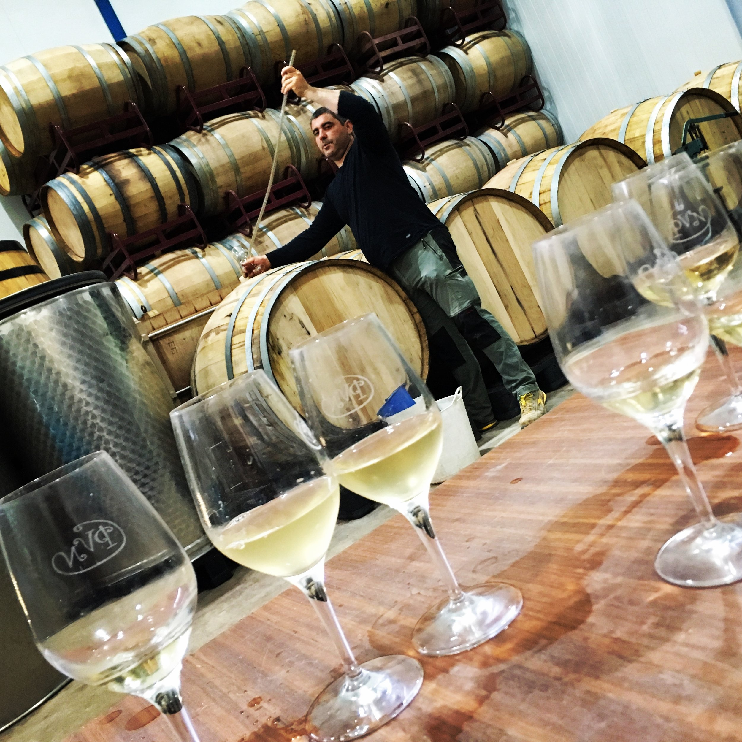 Tasting 'winds' from Tarancona vineyard