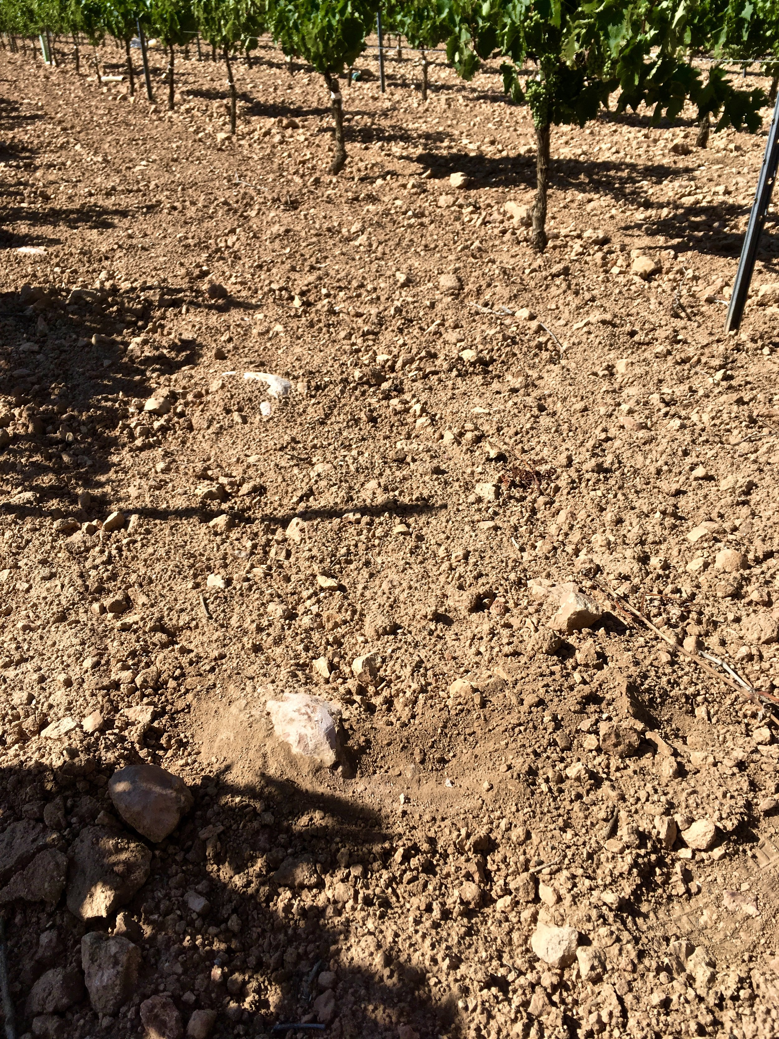 Soils (Calcareous nature beneath, hello acidity!) | La Motilla vineyard