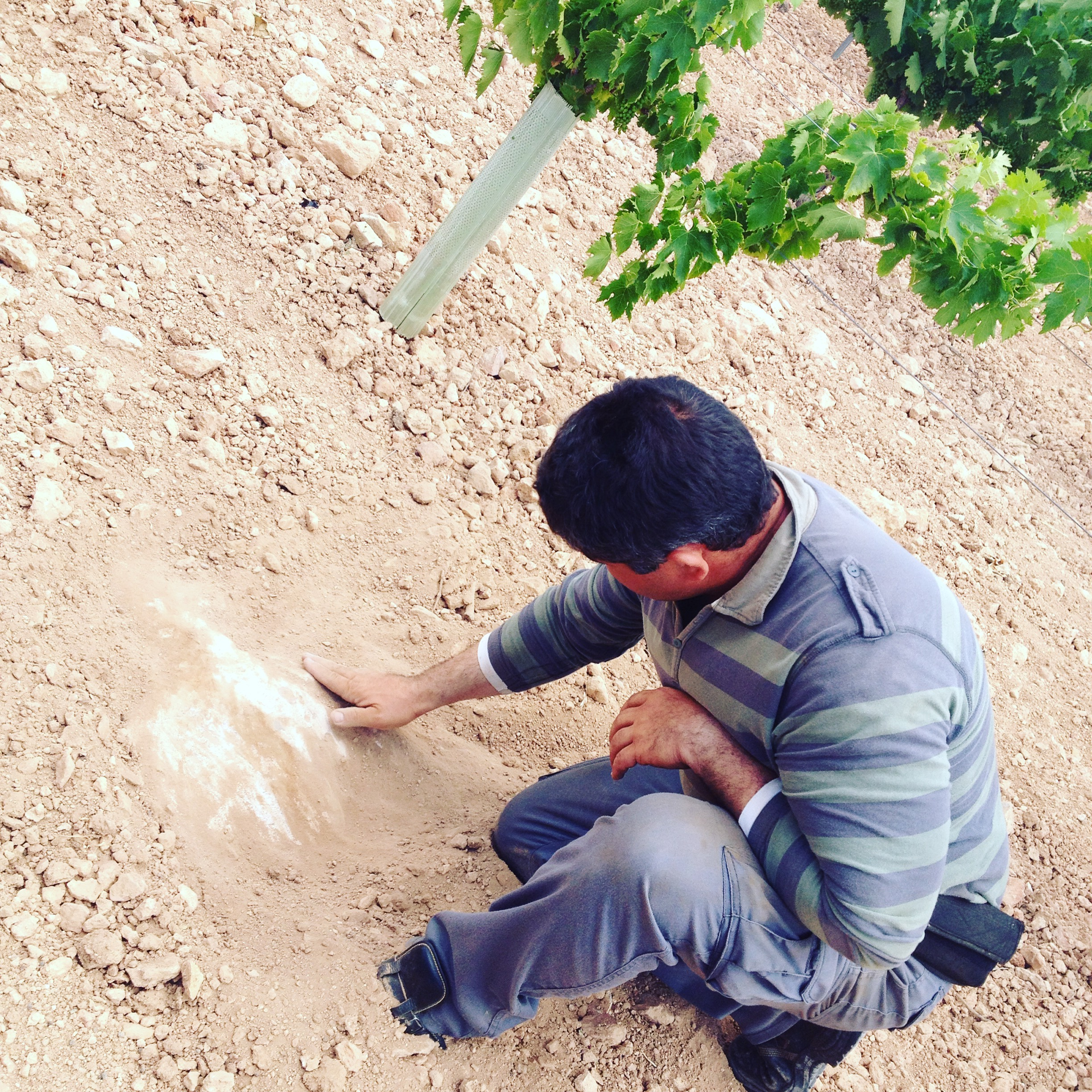 Exposed limestone bedrock | La Motilla vineyard