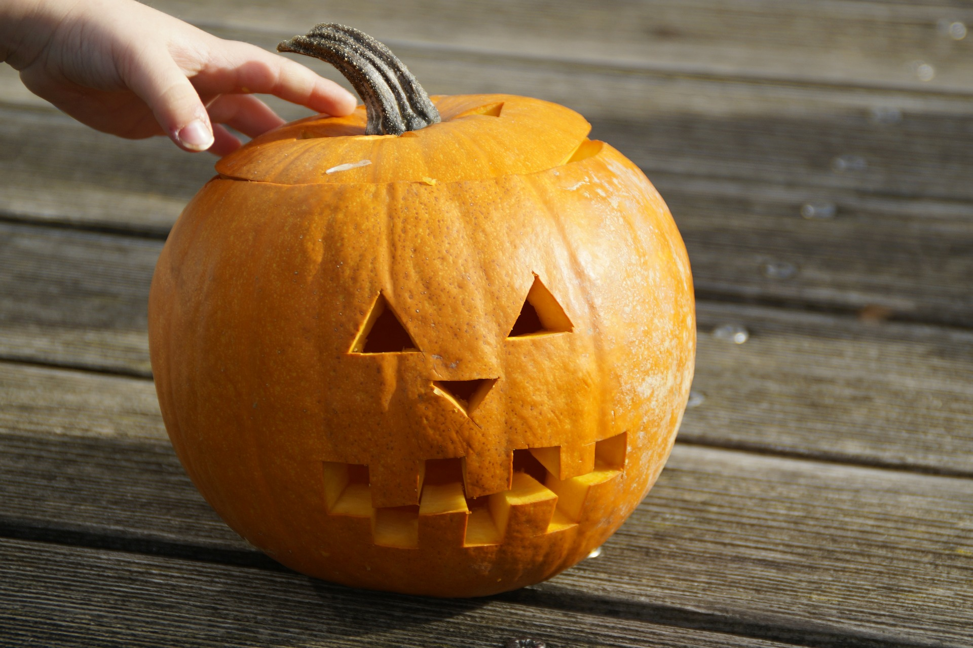 pumpkin-201113_1920 (1).jpg