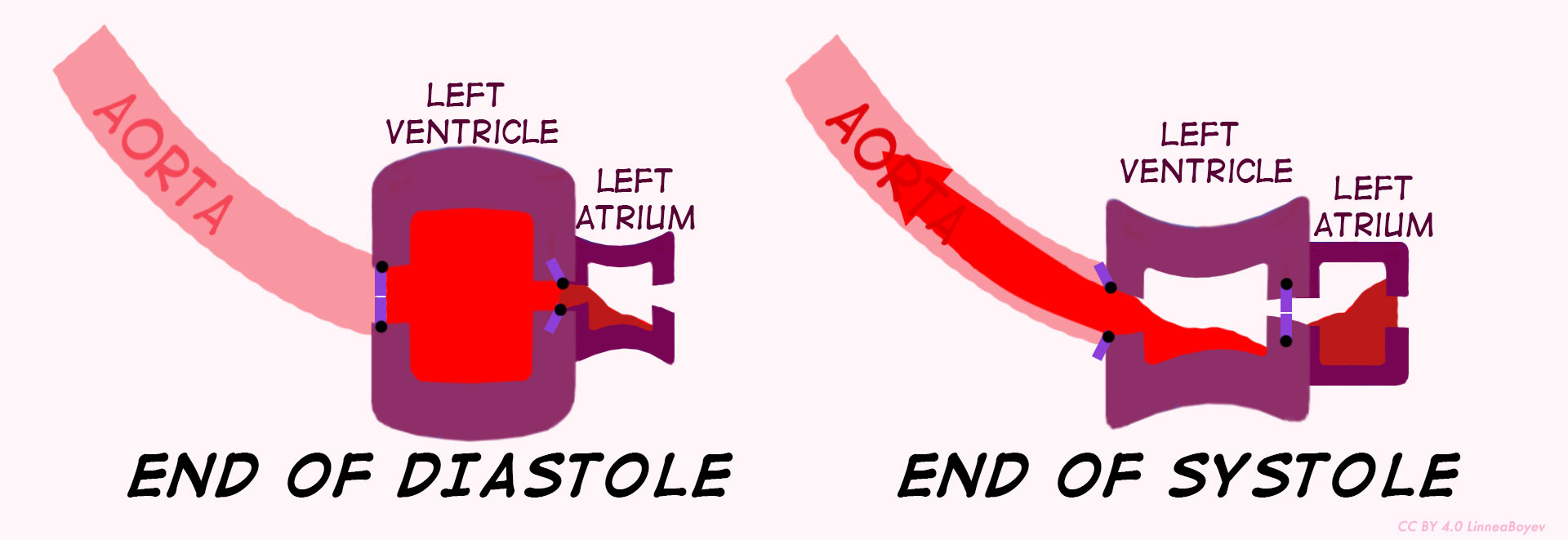 Where the blood is in the left ventricle at the end of systole and the end of diastole.