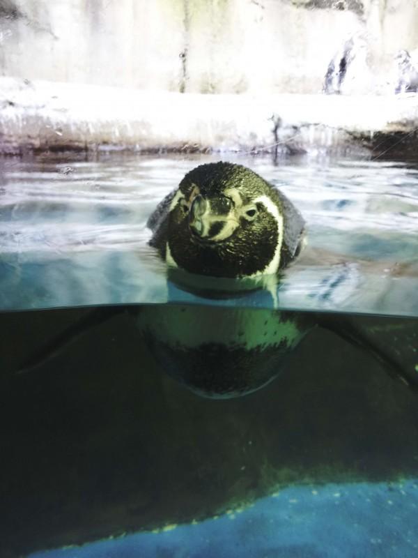 Dubai-Aquarium-penguin-copy-e1364561547153.jpg