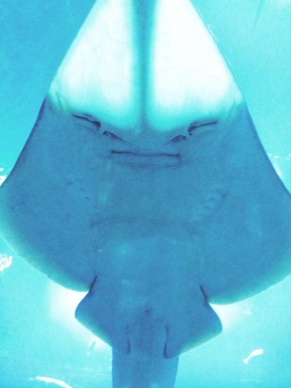 dubai-aquarium-sting-ray-copy-e1364561518186.jpg