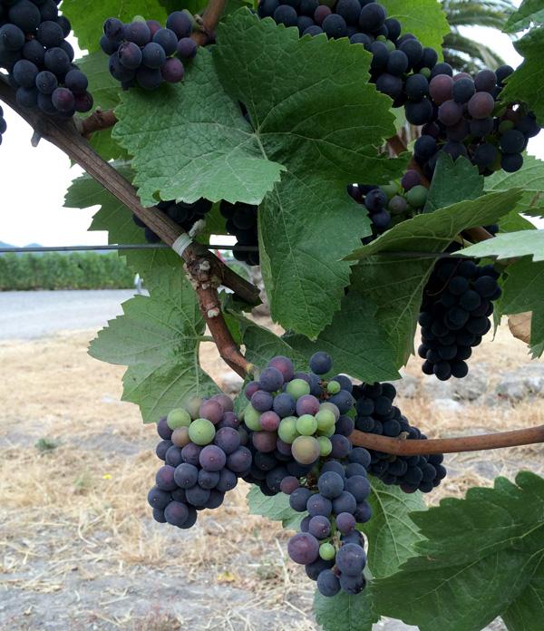 wine_country_weekend_8.jpg