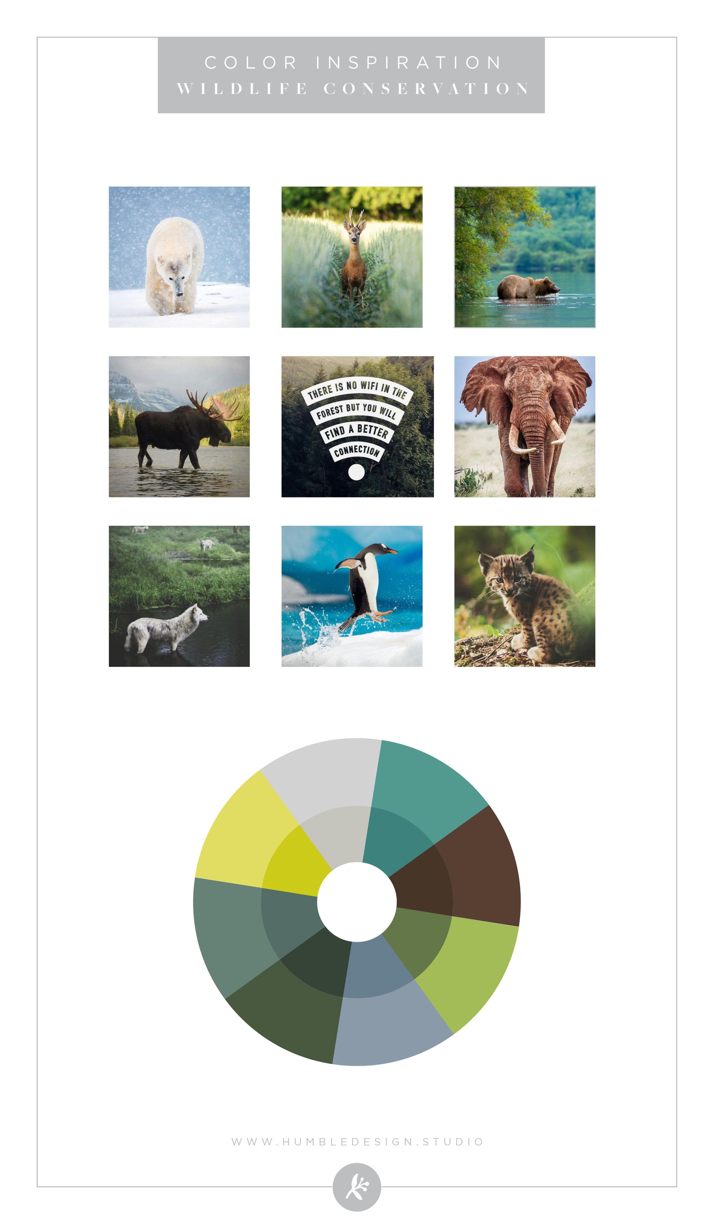Wildlife Conservation Color Palette Inspiration