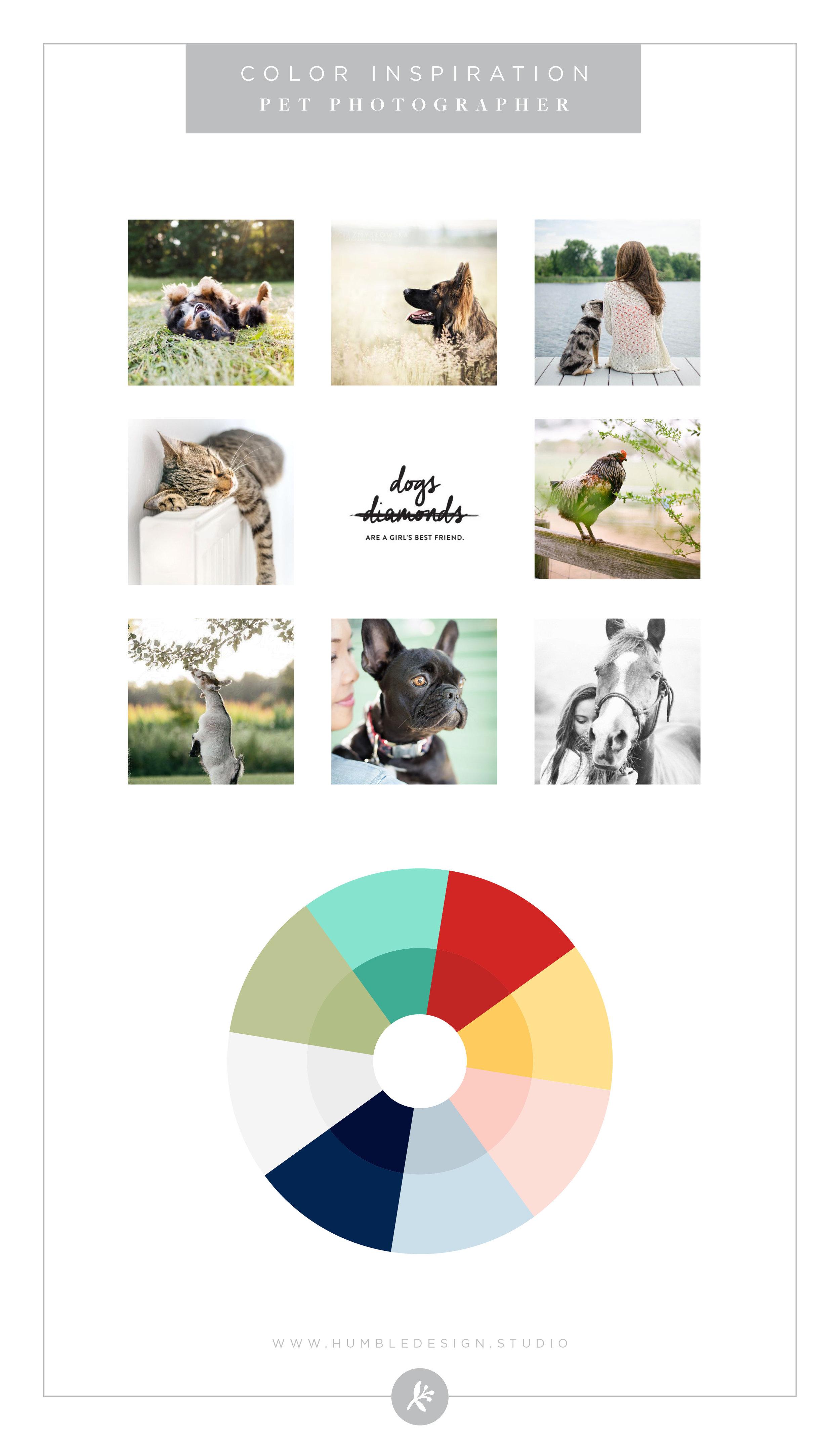 Pet Photographer Color Palette Inspiration