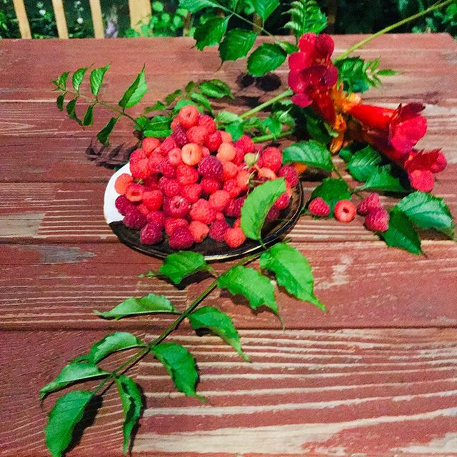 "Did you know Robin (aka our ""Sweet Chief"") grows her own organic raspberries to whip into our fresh, handmade SoftServe Icecream? #brainfreeze never tasted so good! . . #shopsmall #shoplocal #icecream #softserve #raspberries #summer #greatbarrington #berkshirefoodies #nyceats #laeats #brooklyneats #visittheberkshires #massachusetts #newengland #newyork #newjersey #connecticut #longisland #brooklyn"