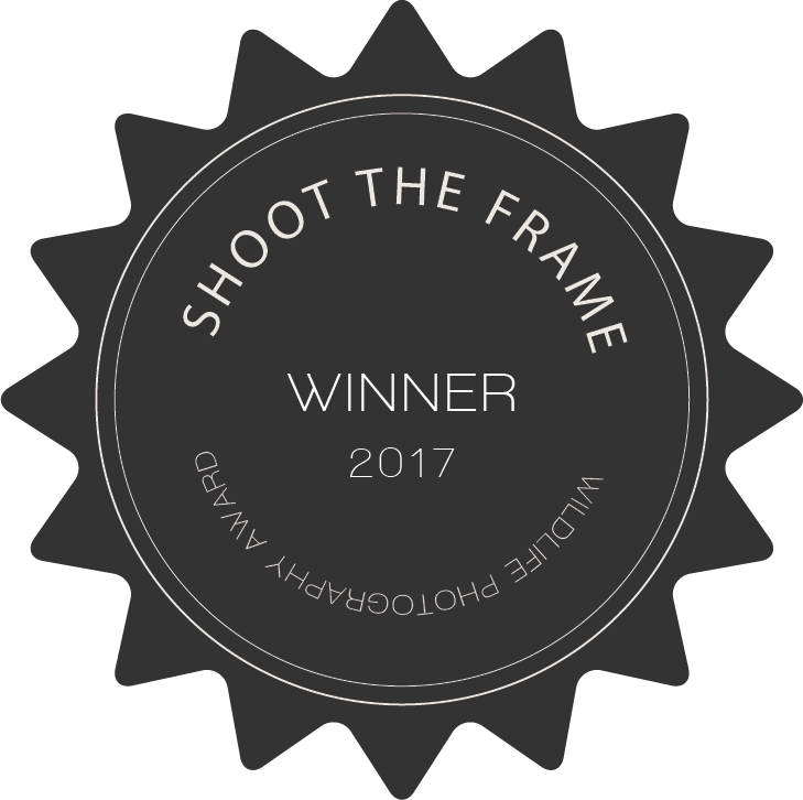 shoot_the_wild_winner_badge_2017.png
