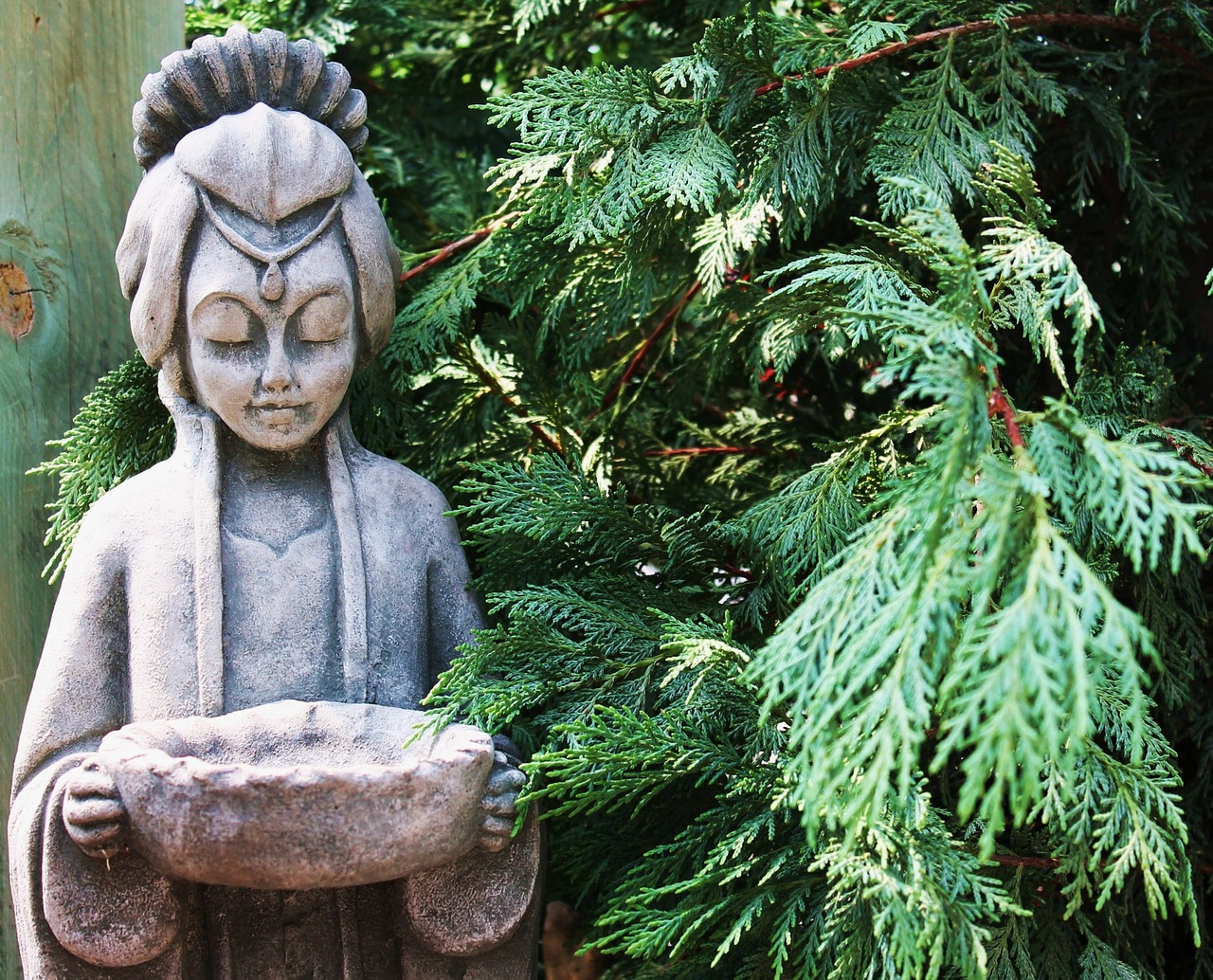 Quan Yin pine tree_amberavalona_pixabay.jpg