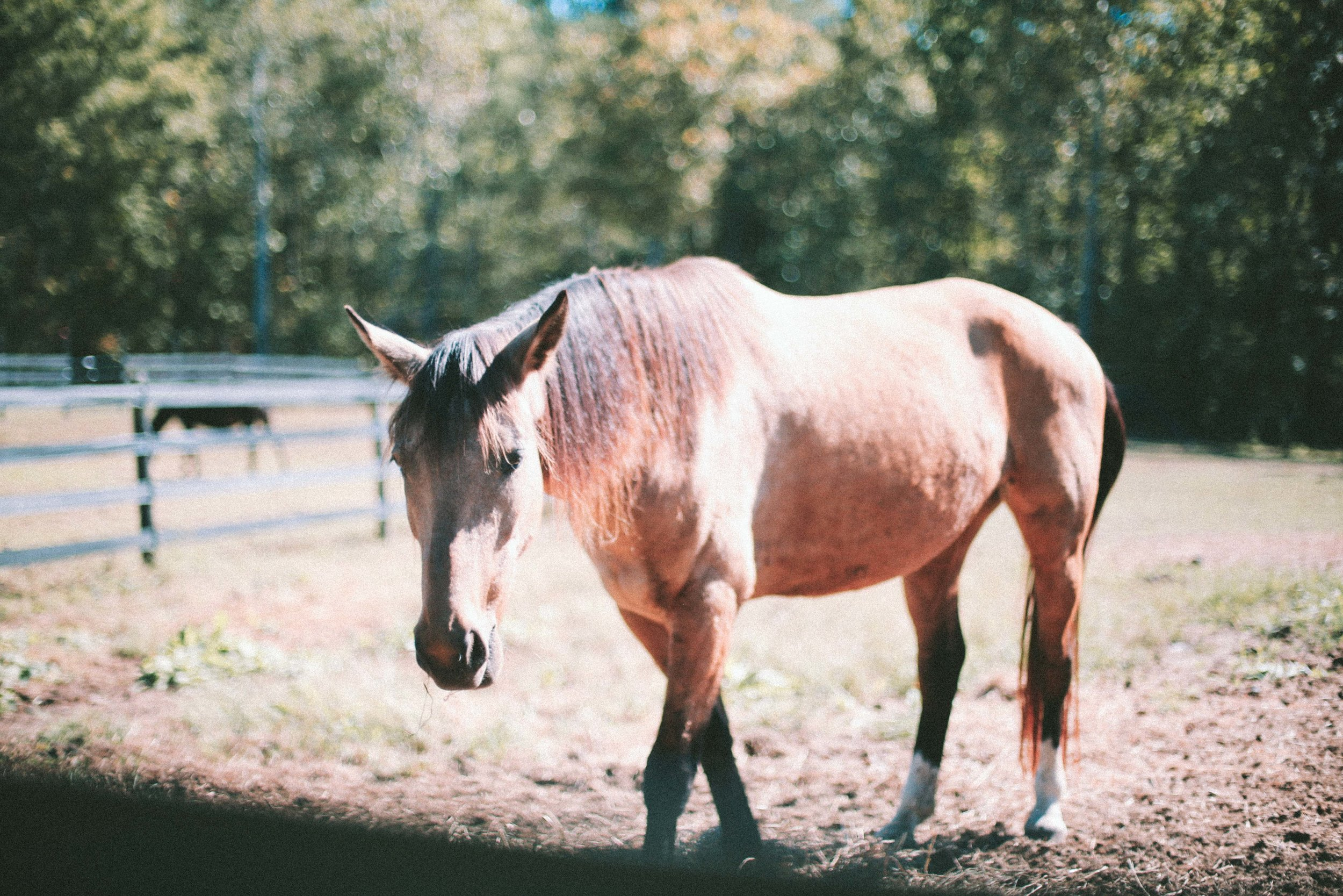 equine therapy-5.jpg
