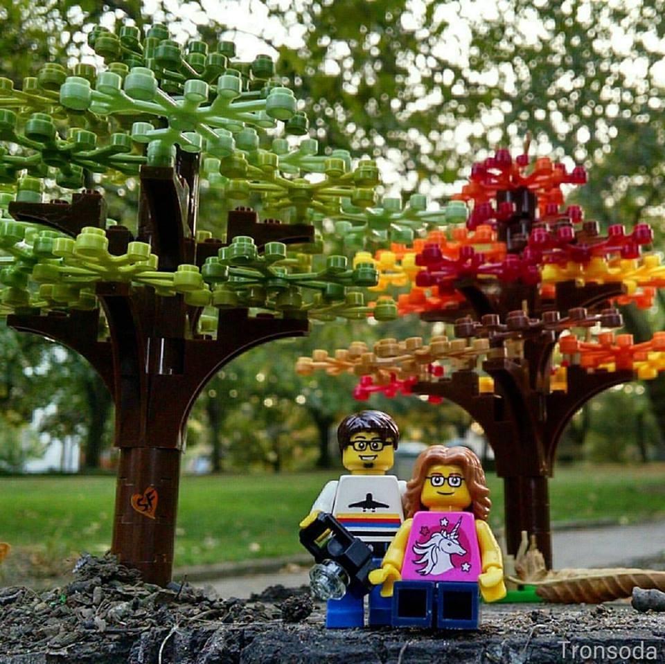 Fall Coming      Seattle WA.jpg