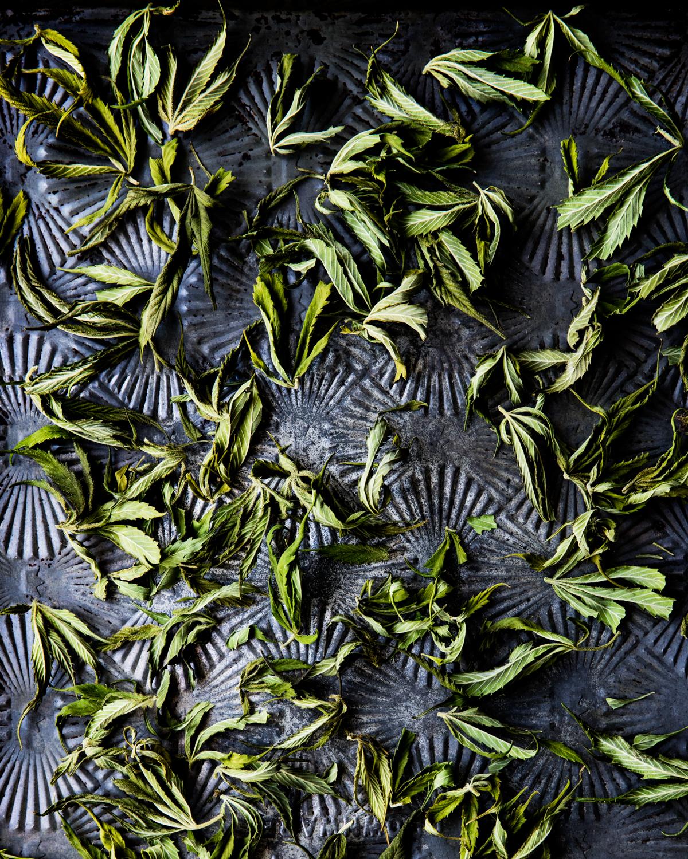 erinscottphotography_122west_cannabisgardener-6016.jpg