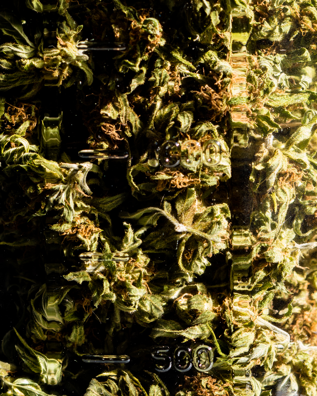 erinscottphotography_122west_cannabisgardener-8045.jpg