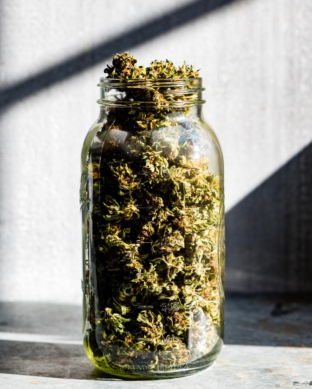 erinscottphotography_122west_cannabisgardener-8042.jpg