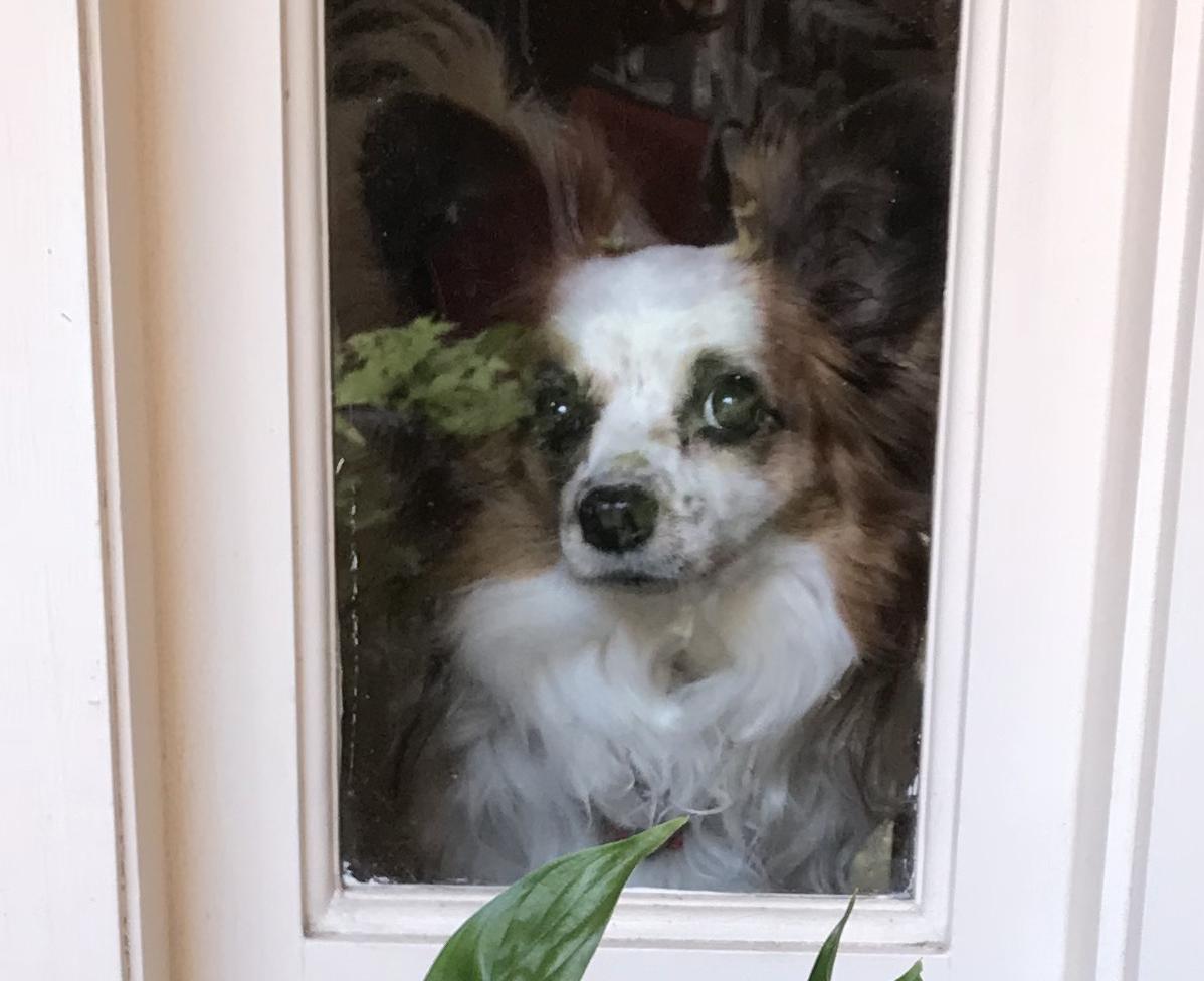 Little Dog.jpg