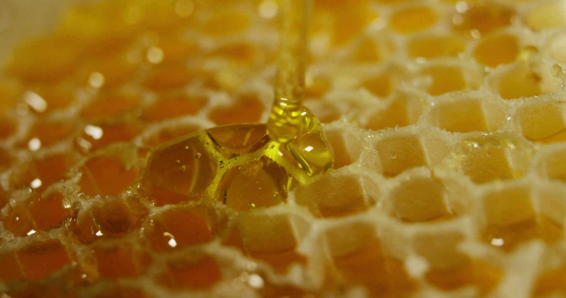 slow-motion-of-biological-and-genuine-honey-drips-inside-a-jar-honeycomb-dripping-honey-black-background-and-a-wooden-table-macro-close-up_rvexq2dnfx_thumbnail-full03.png