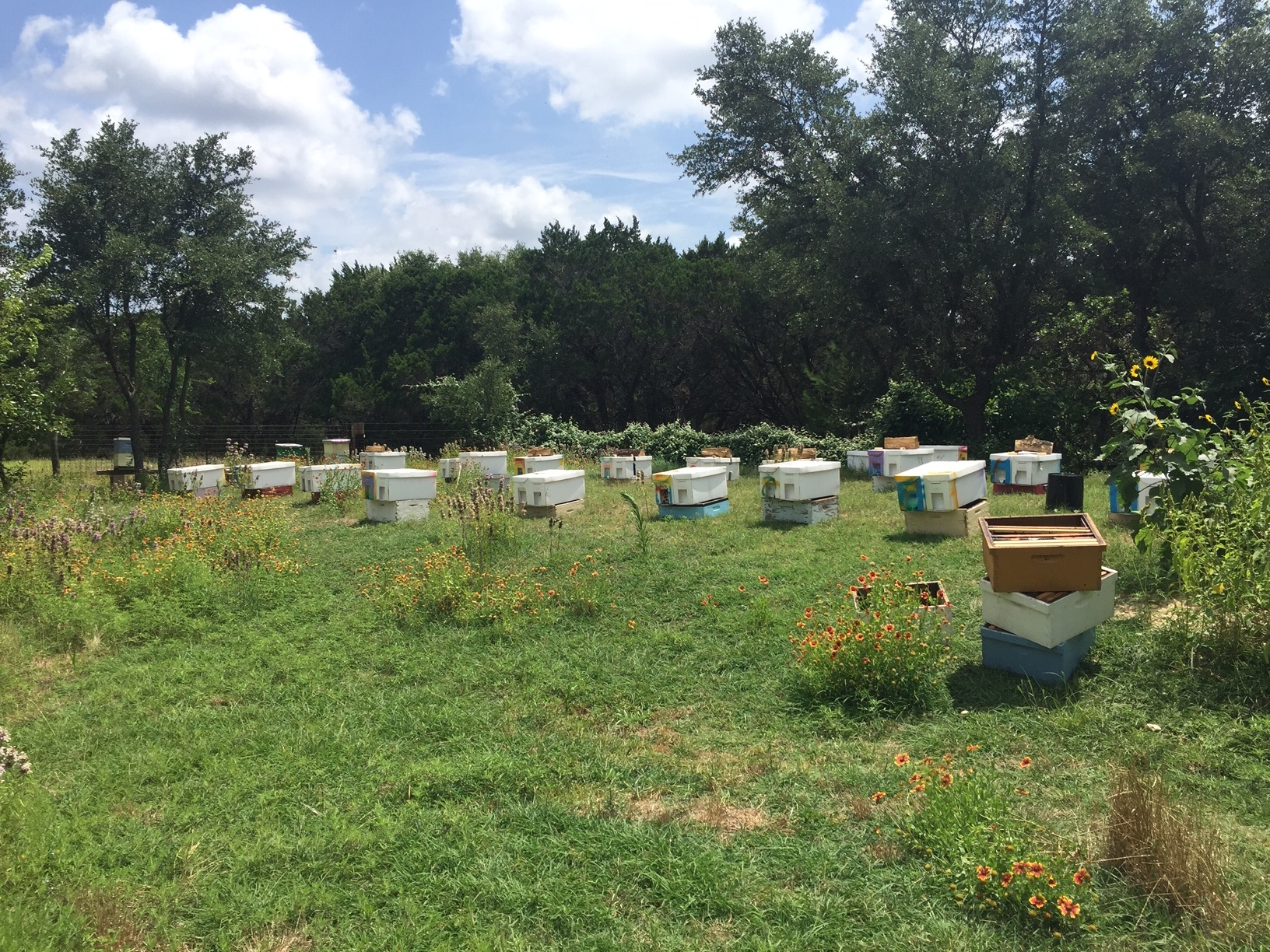 Just a few of the 150 hives living at Texas Bee Honey Farm