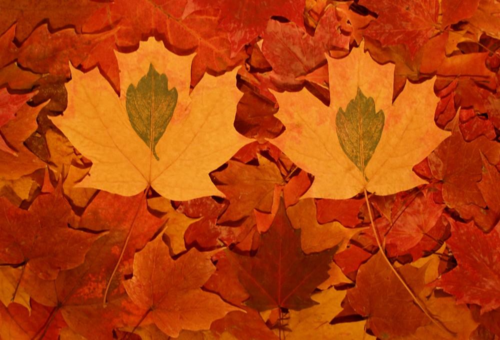 Baker_Seasonal-Fall-Pile-of-Maples-e1323114808464.jpg