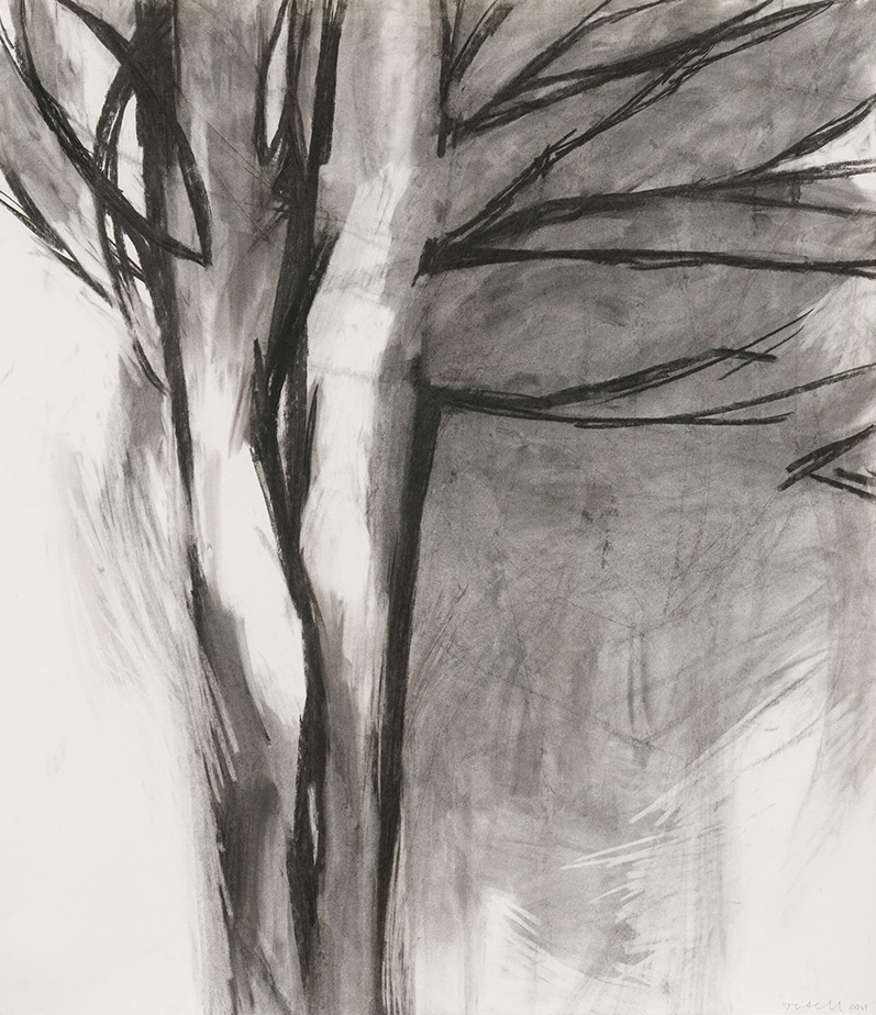 """Branches , charcoal on paper, 42"""" x 37"""", 2011"""