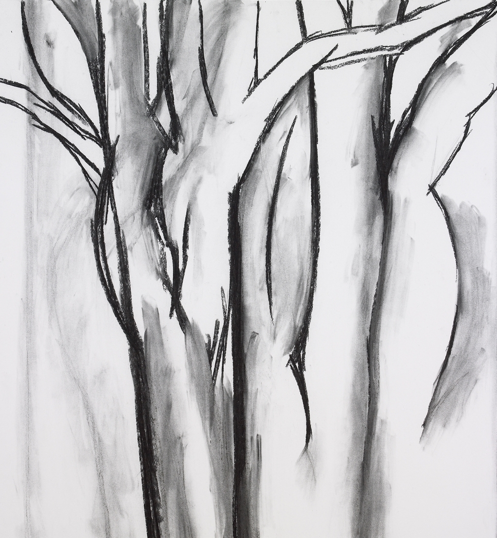 """Trees , charcoal on paper, 41"""" x 37"""", 2009"""