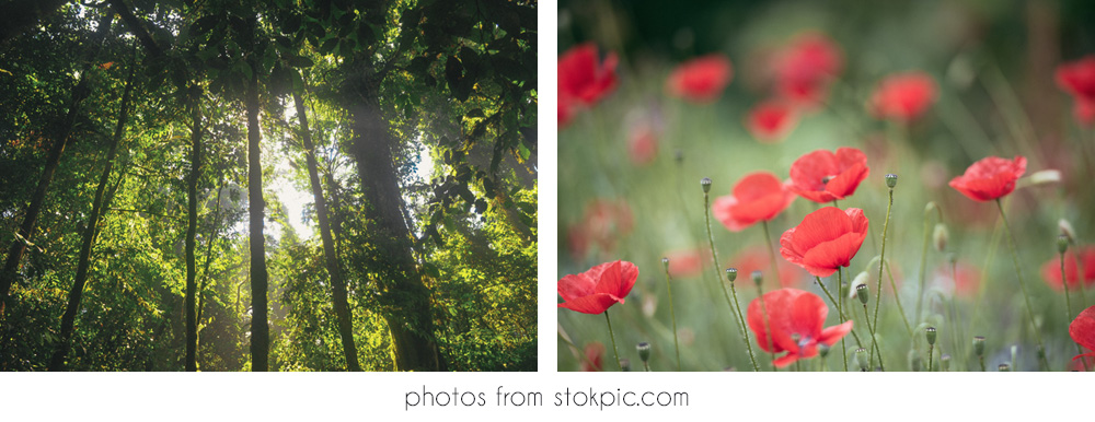 How to Find Great Free Stock Photos for your Small Business Blog - itsorganised.com - samples images from stokpic.com.