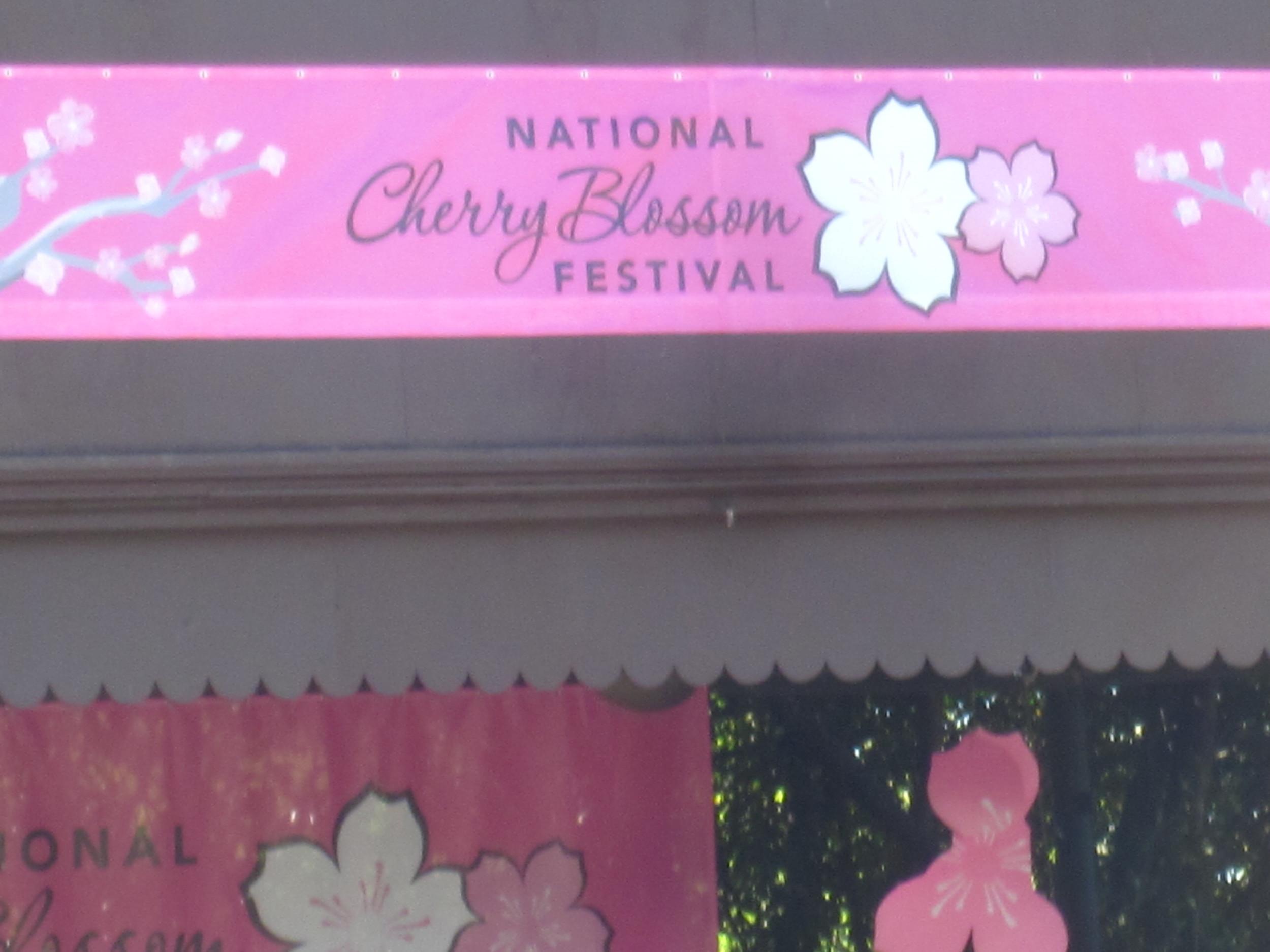 Yoga-Cherry-Blossoms-003.jpg