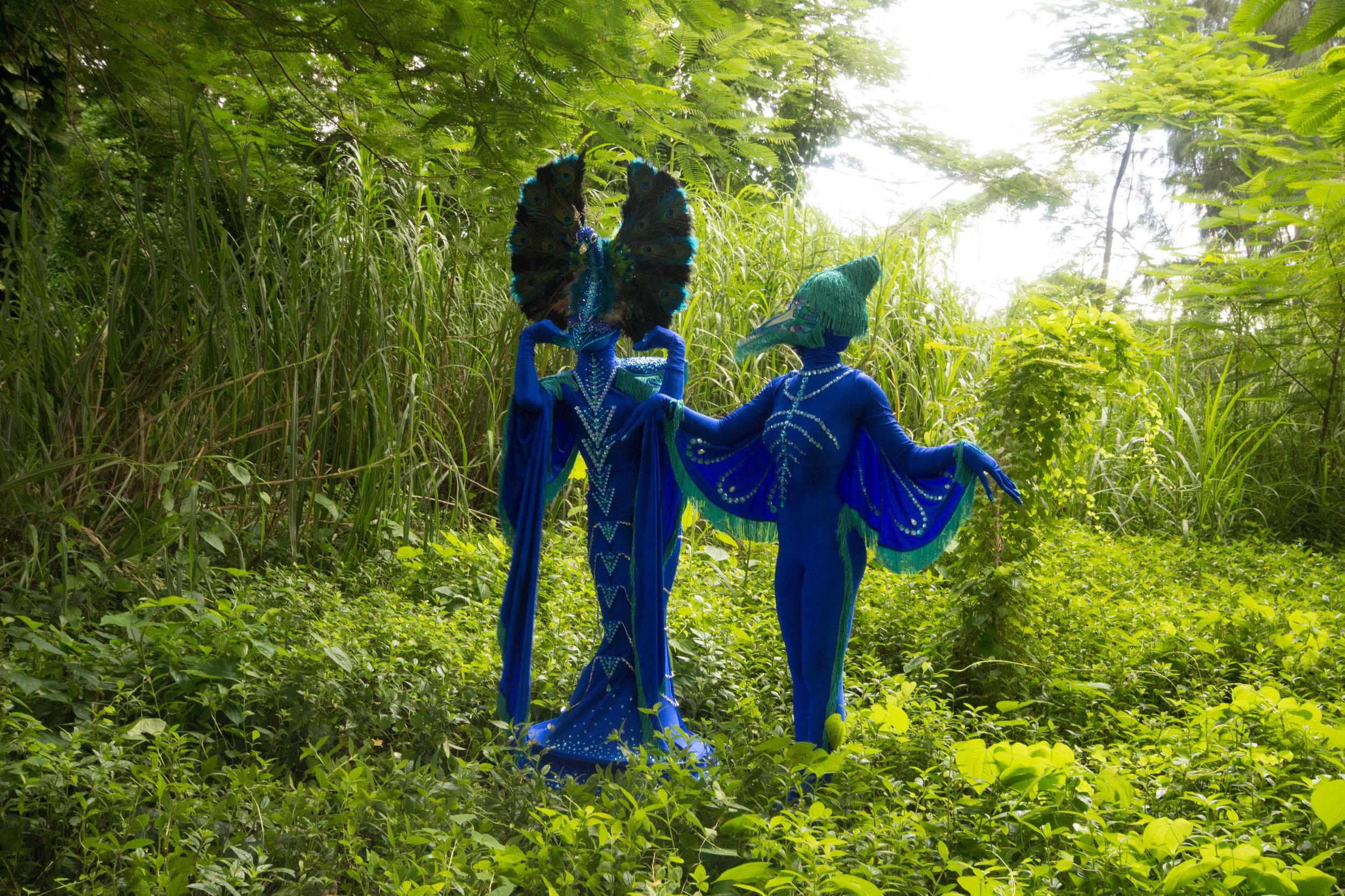 Peacock fairytale-9212.jpg