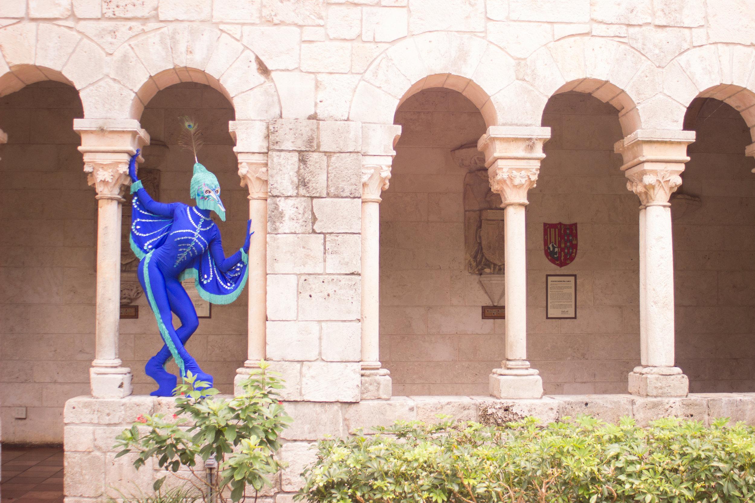 Peacock fairytale-8982.jpg