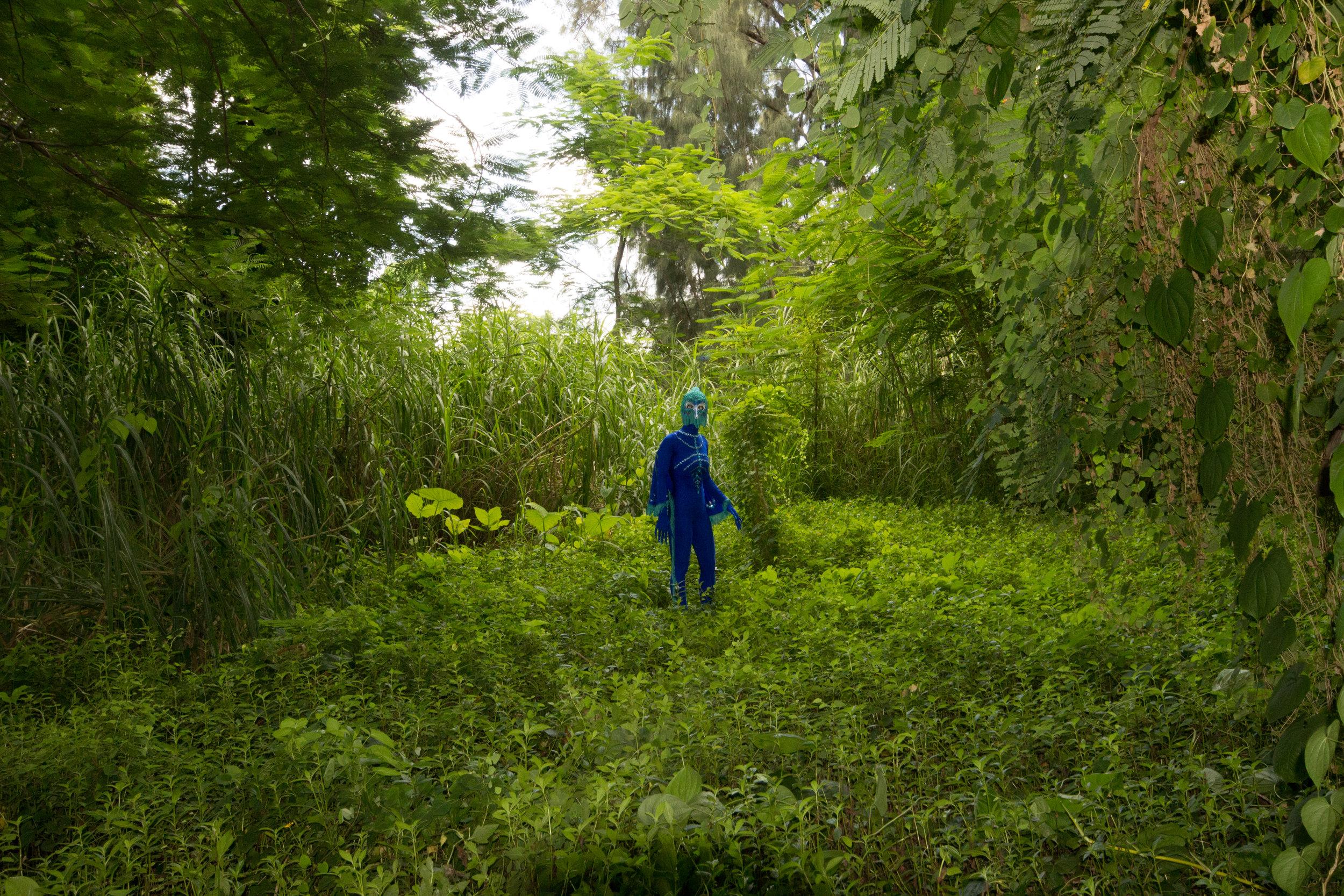 Peacock fairytale-9194.jpg