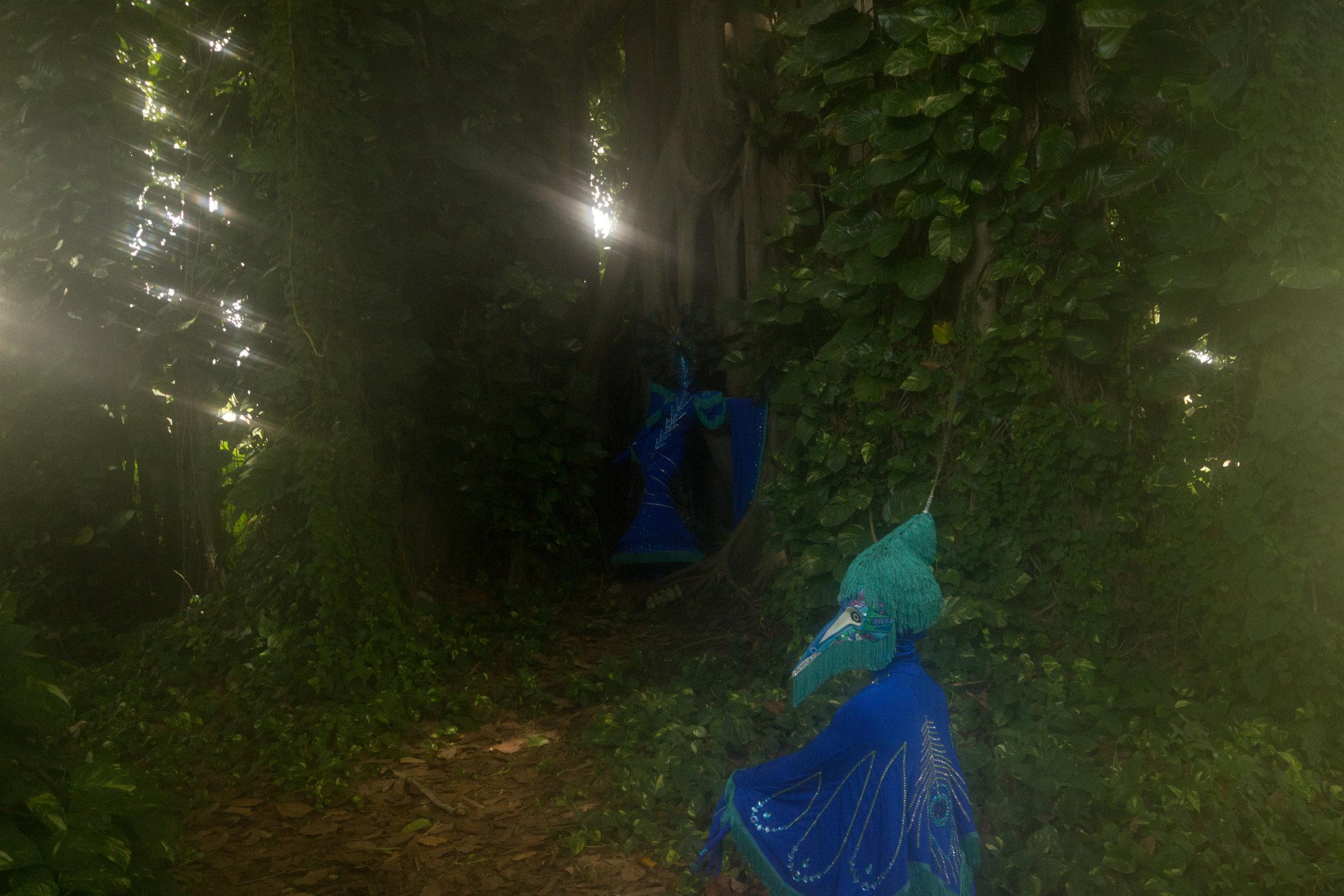 Peacock fairytale-9177.jpg