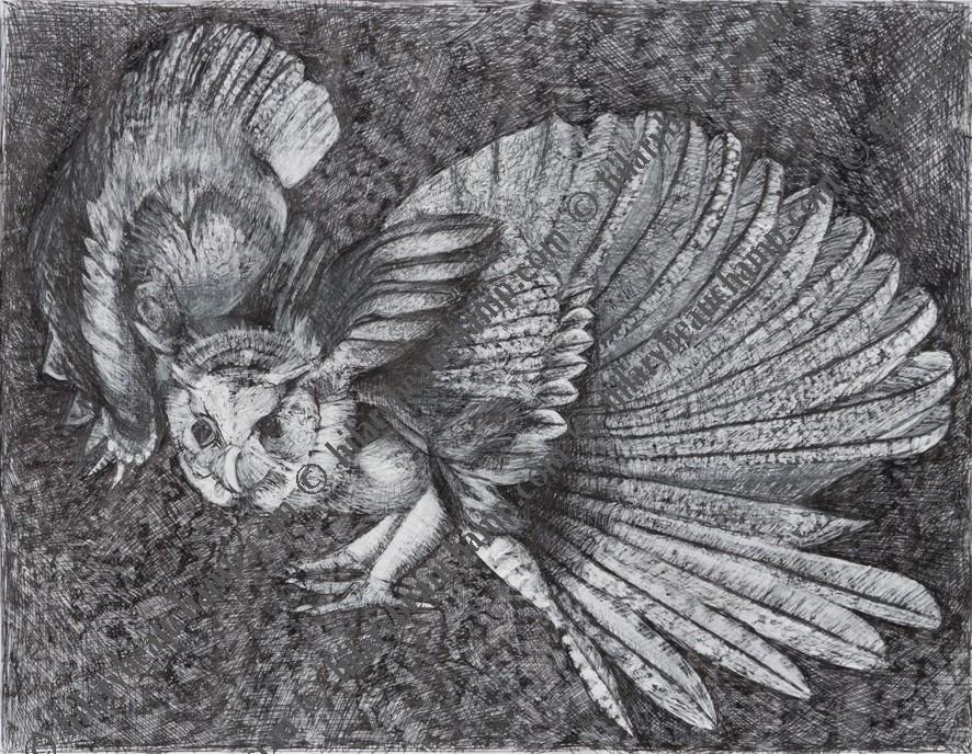 OWL(2).jpg