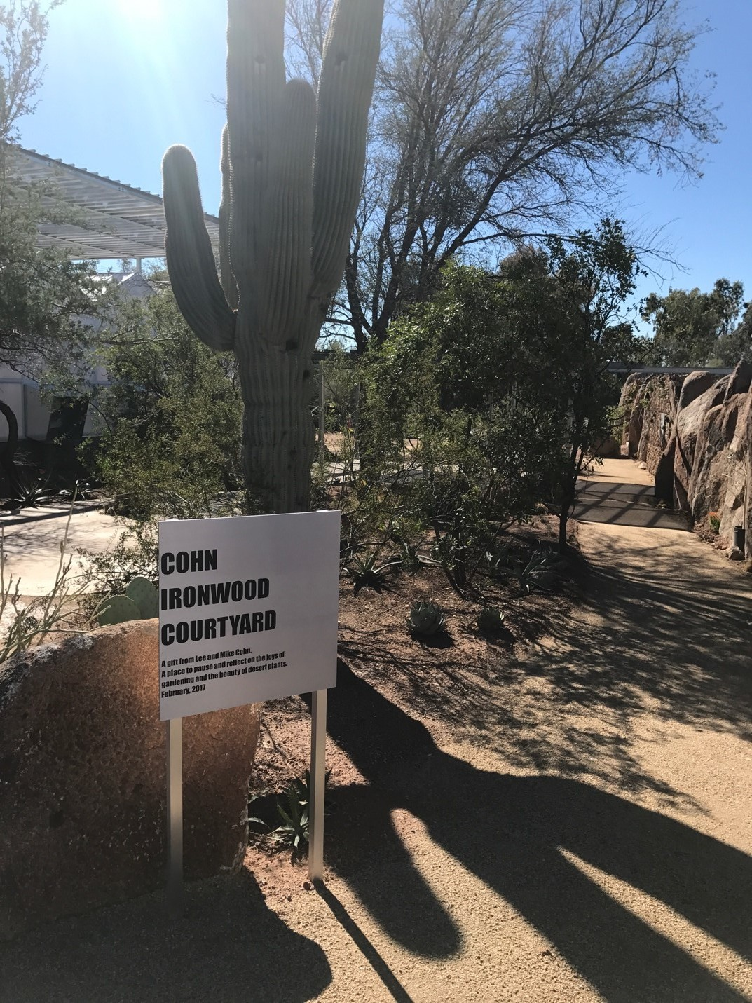 The Cohn Ironwood Courtyard allows staff and volunteers to enjoy some peace-and-quiet in the beautiful AZ outdoors.