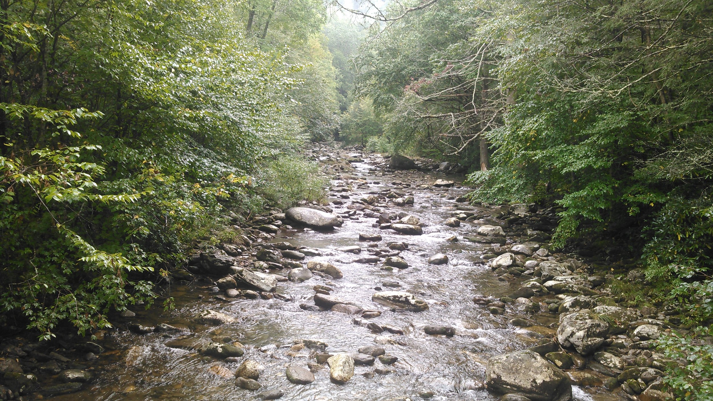 The creeks in this area are absolutely breath taking!