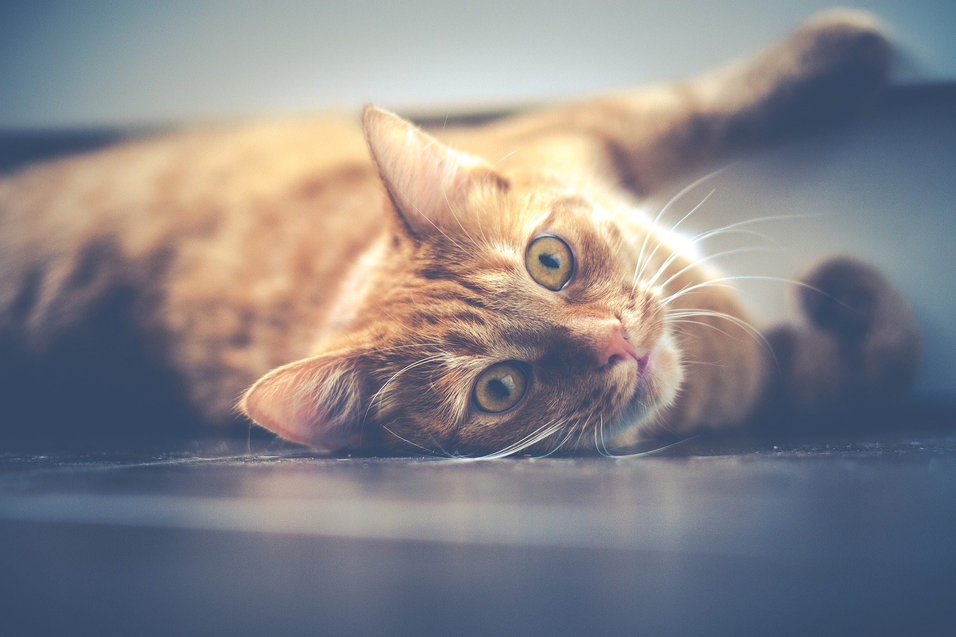 cat-1044914_1920.jpg