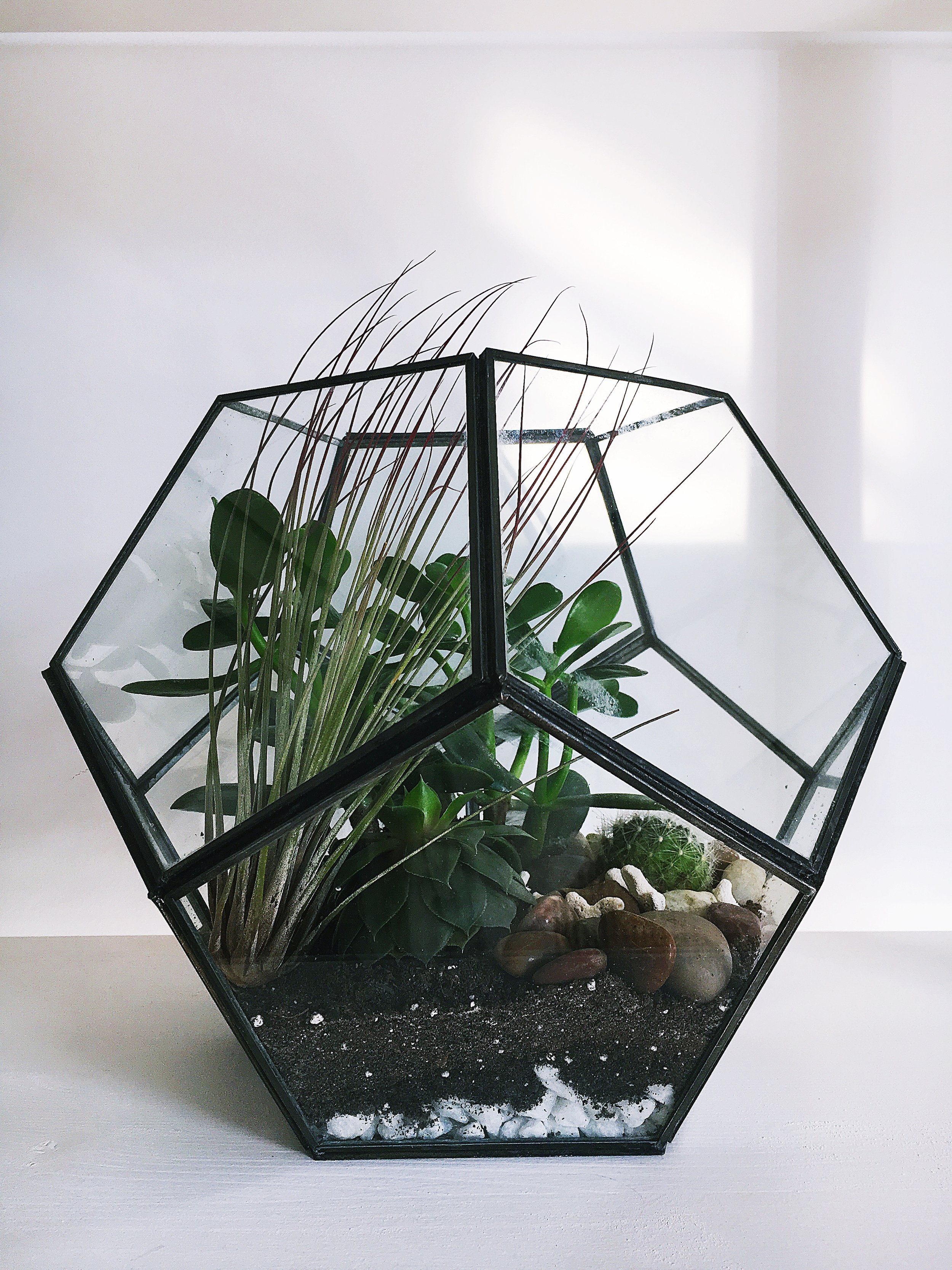 Terrarium with Jade + Air Plants