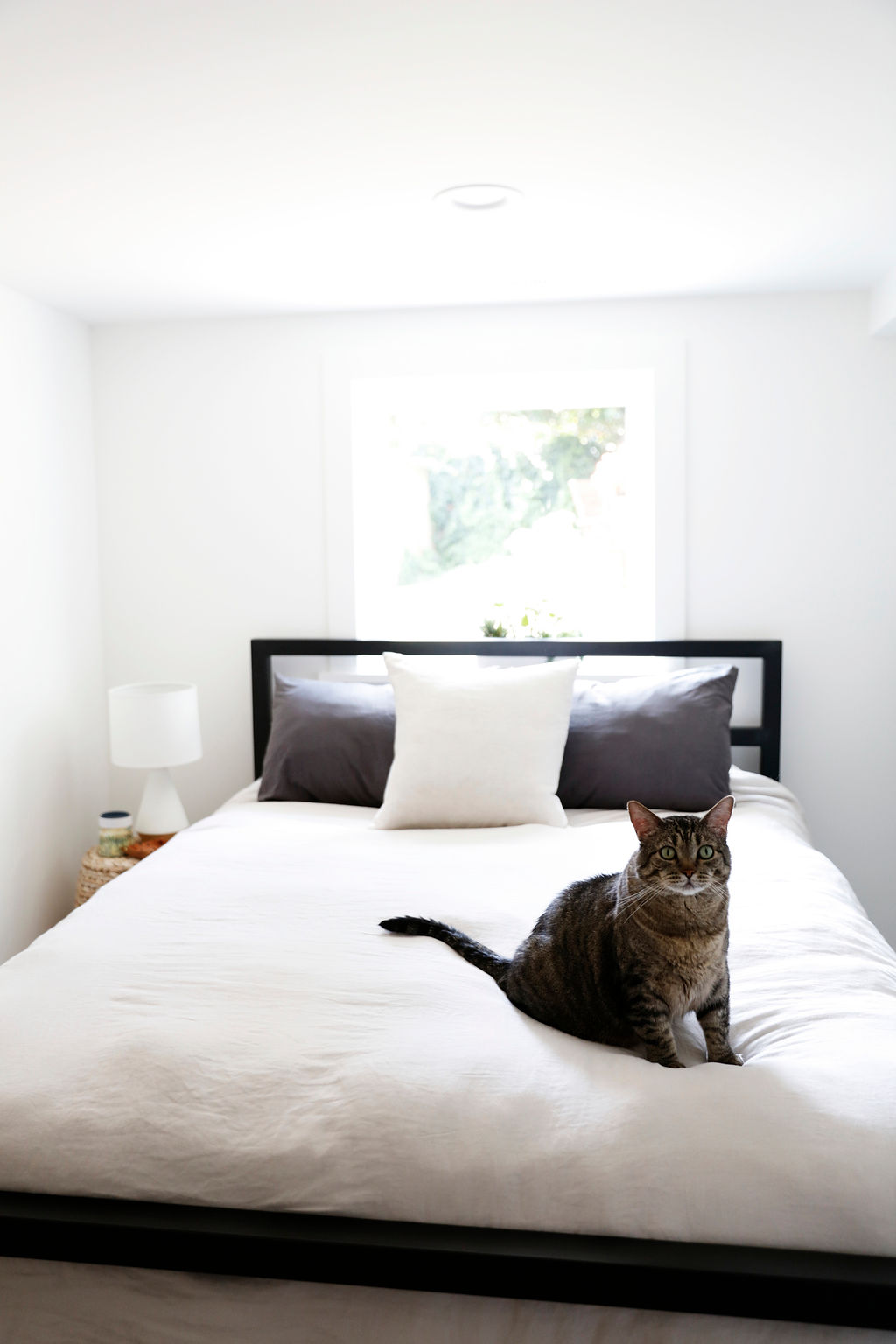 guest bedroom with bud.JPG