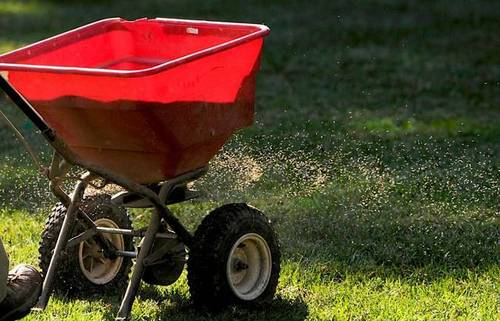 FALL FESCUE SEEDING -