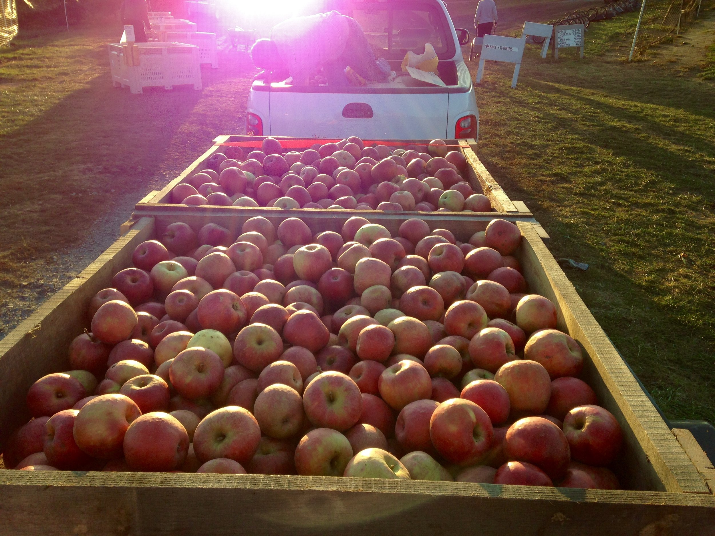 Our team harvesting apples from Larriland Farm in the fall of 2015.