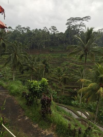eat pray doula ballarat birth support bali indonesia (5).jpg