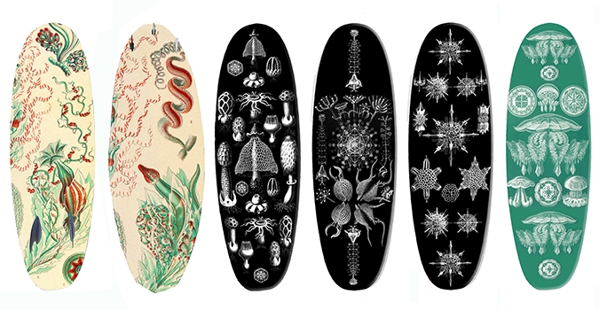 Ernst Haeckel hand painted boards