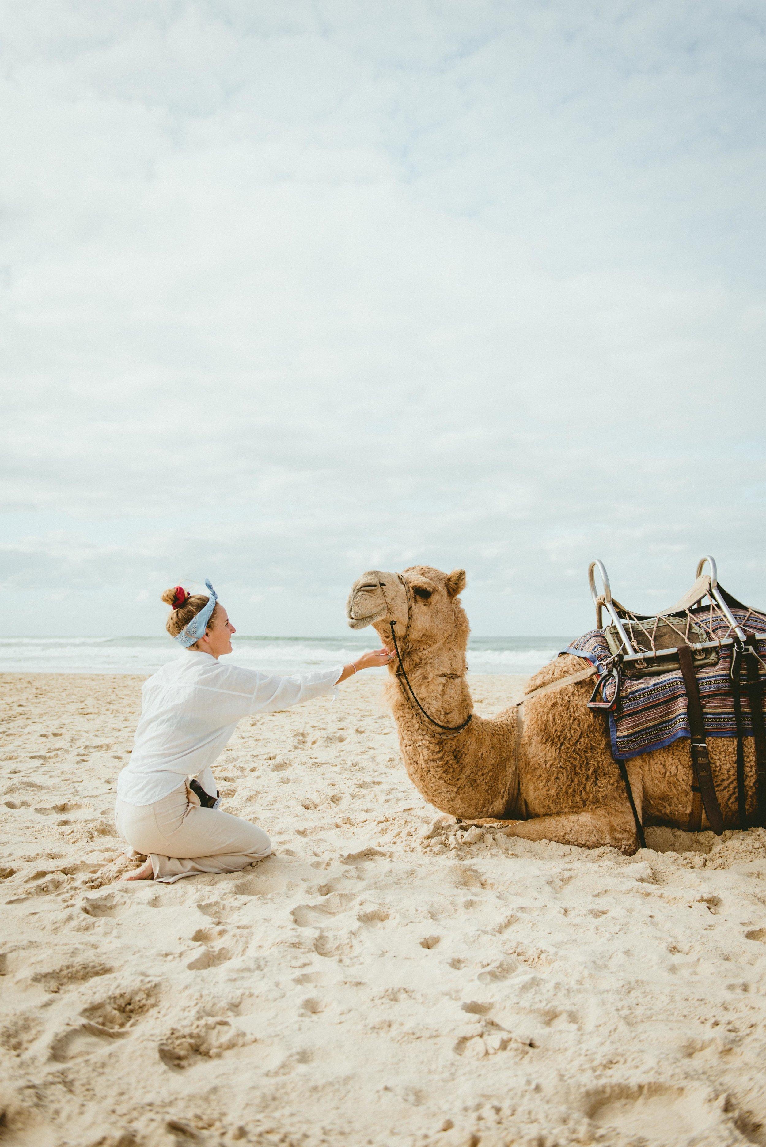 Port Maquarie Camel Safaries