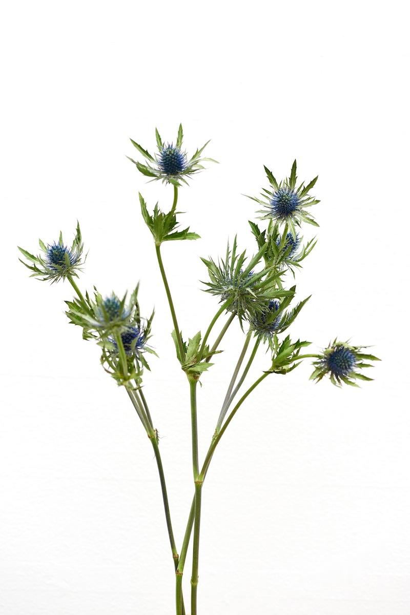 camillemarguet-fleur4.jpg