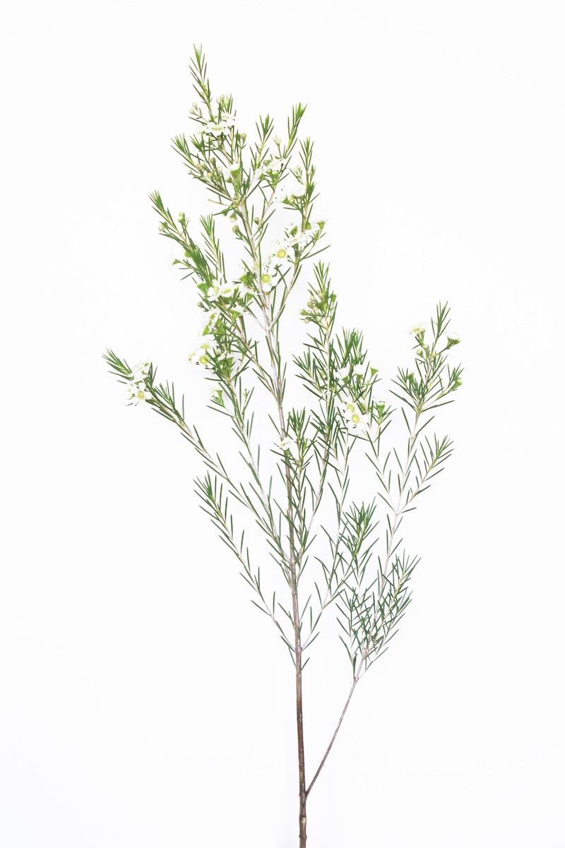 camillemarguet-fleur5.jpg